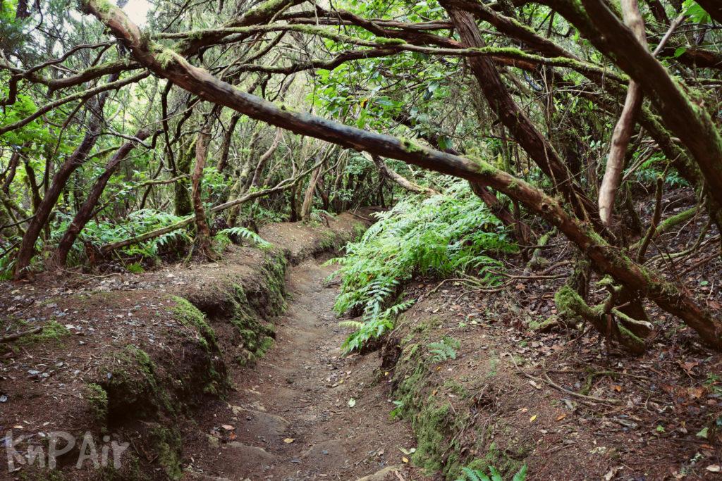тропа заколдованный лес анага