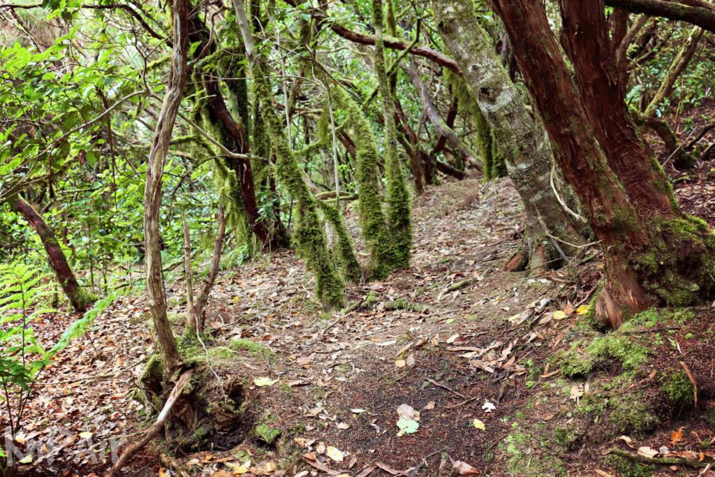 Wonderful wood in Tenerife