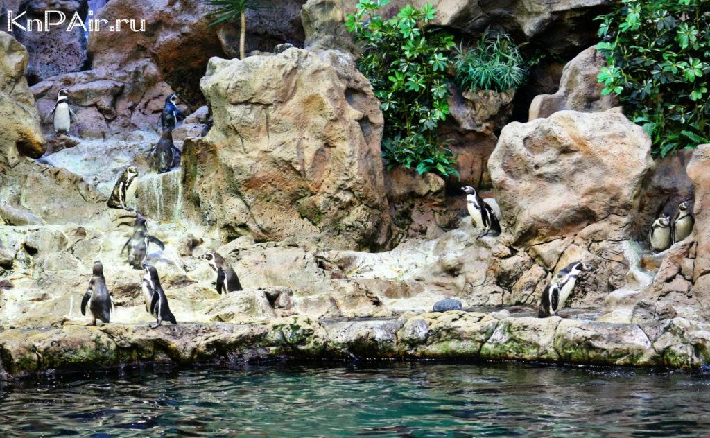 пингвинарий на Тенерифе