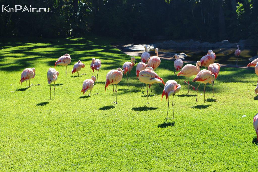 фламинго тенерифе