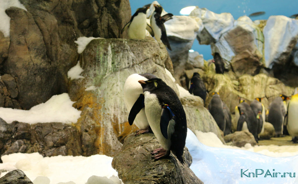 пингвин на тенерифе