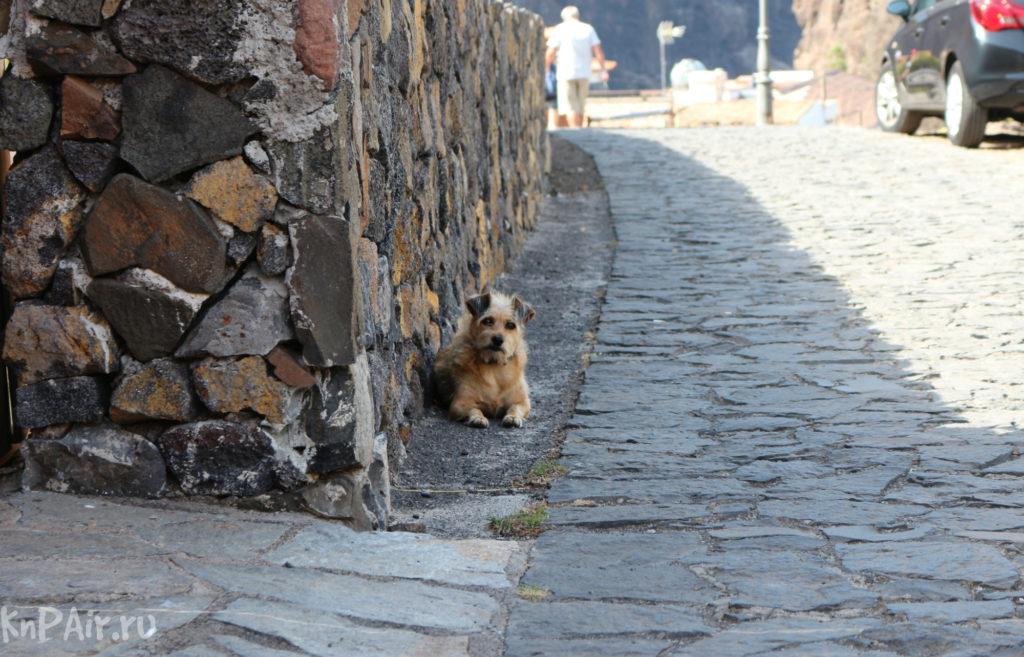 собака на Тенерифе