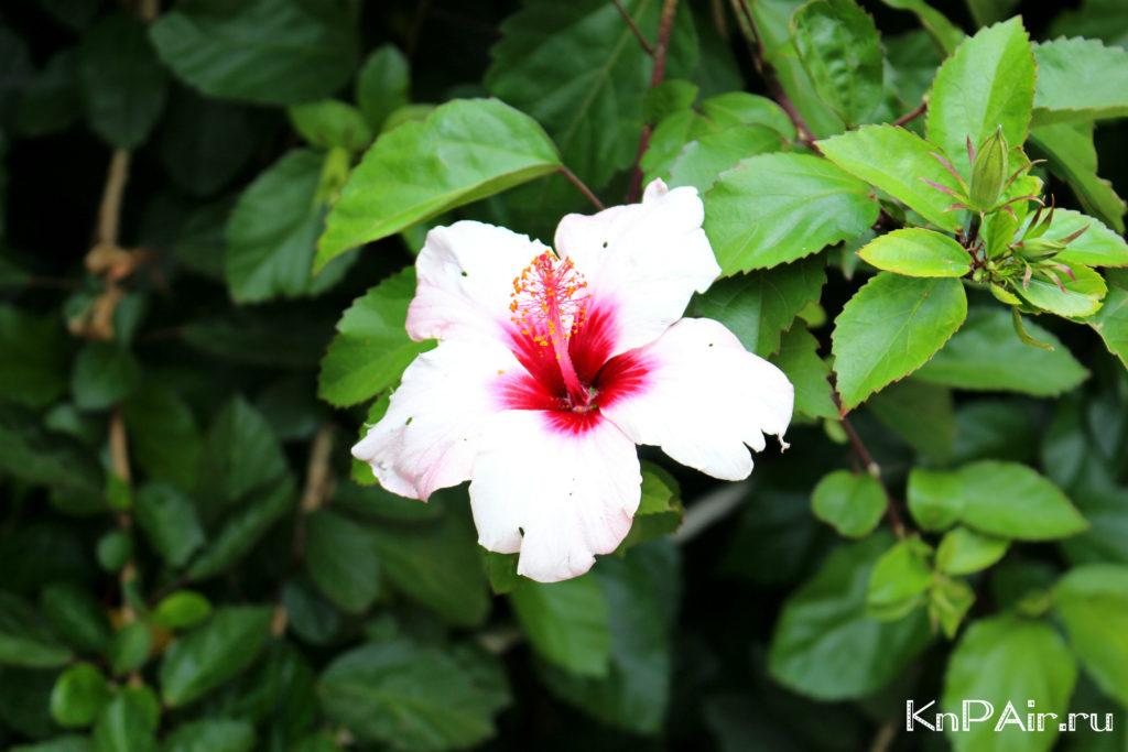 cvety-na-kanarah