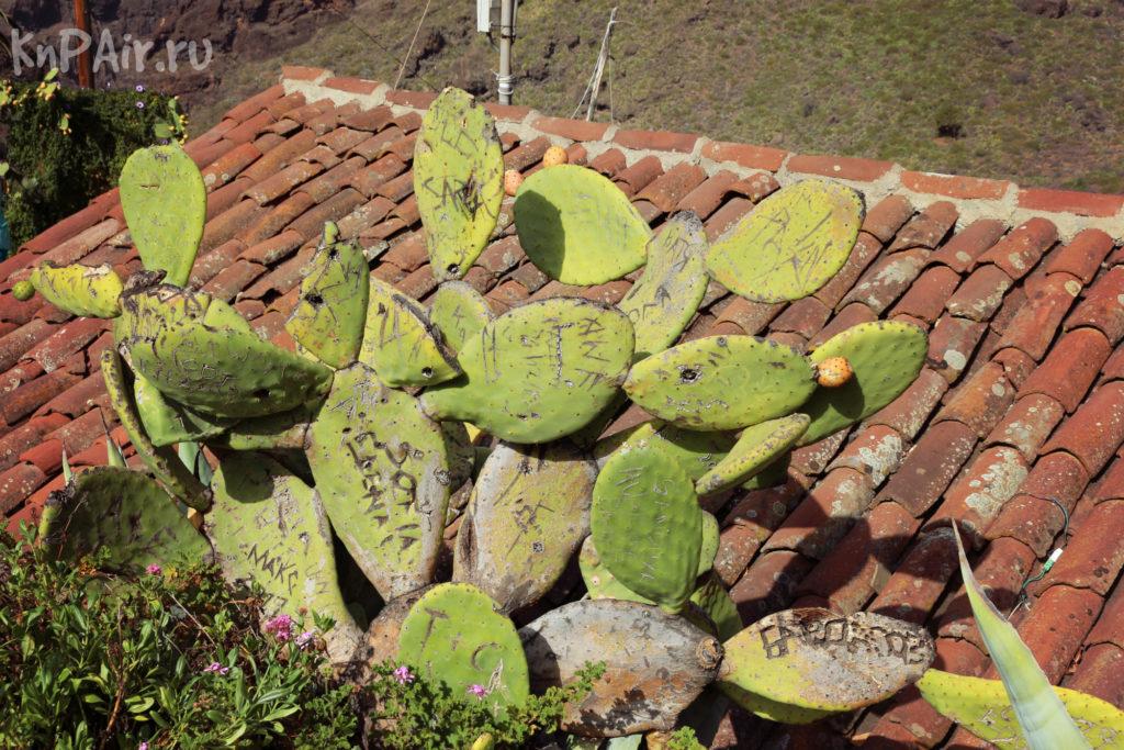 кактус в деревне Маска