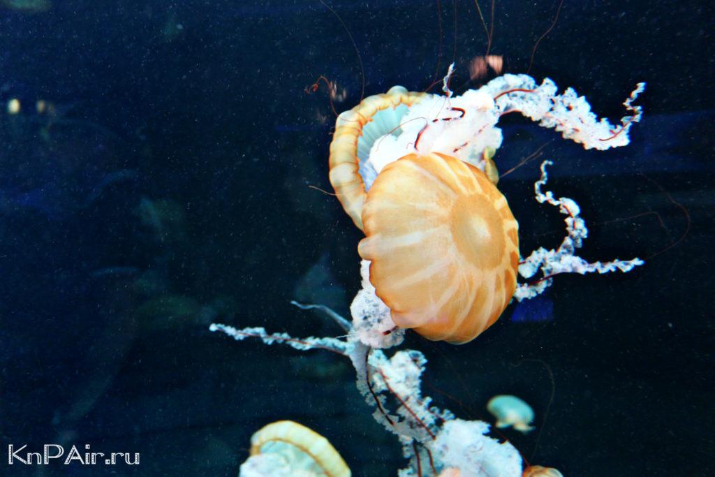 медузы в лоропарке