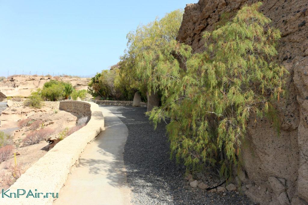 растения-у-пещеры-Хермано-Педро