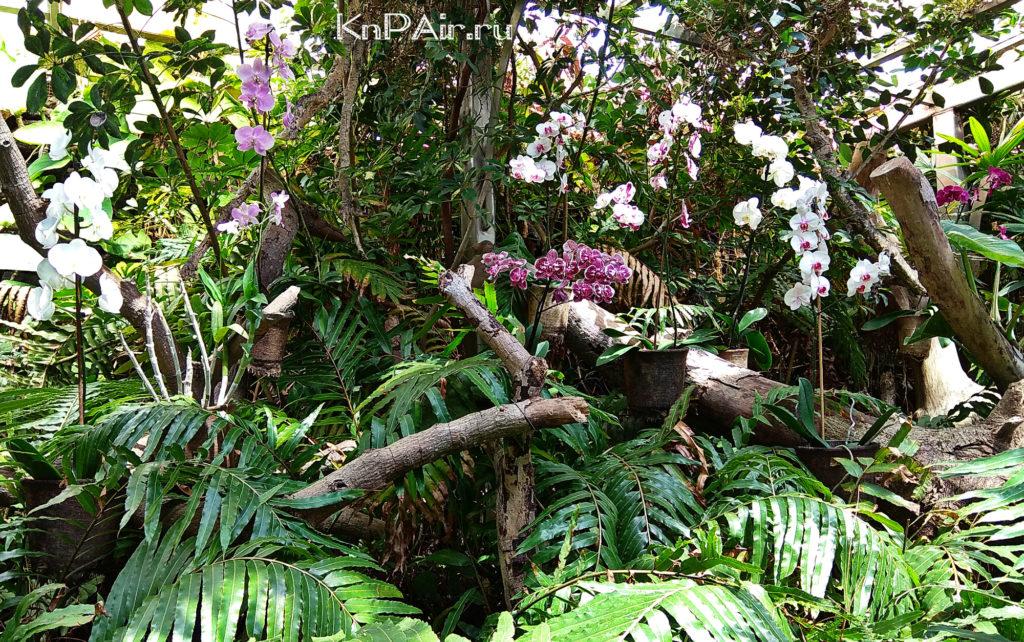 сад орхидей в лоропарке