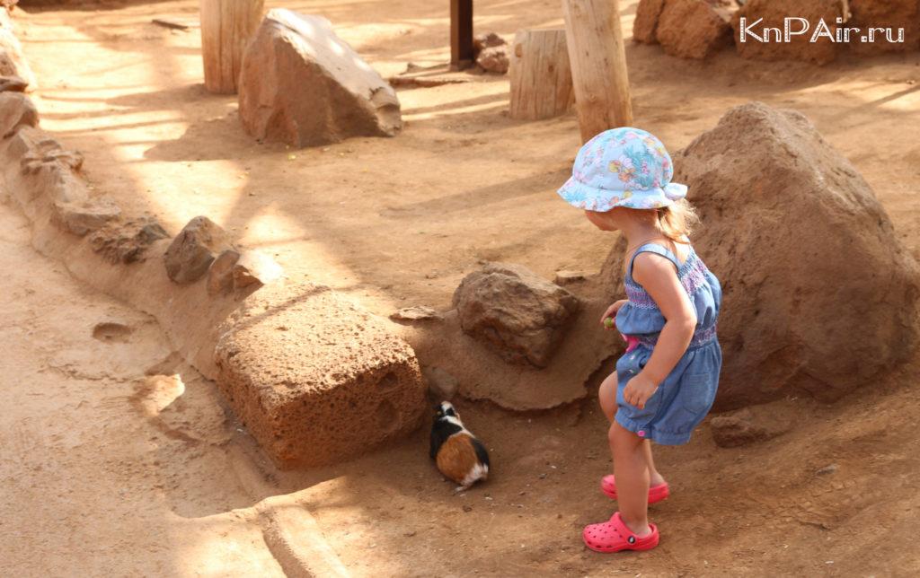 zoopark-na-tenerife