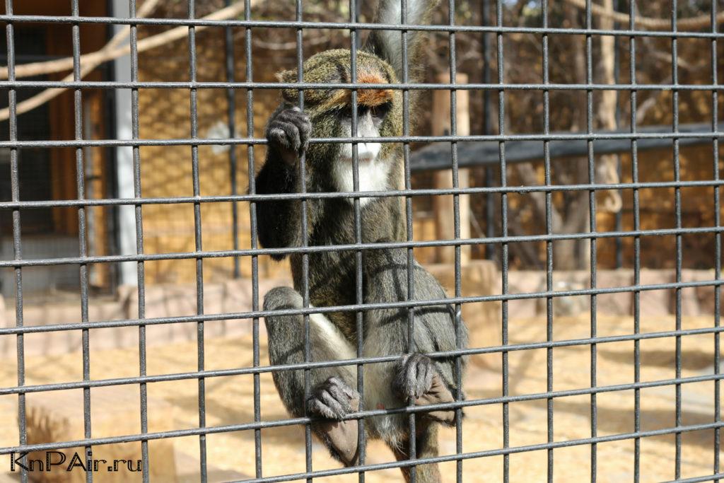 Obezyana-zoopark-na-tenerife