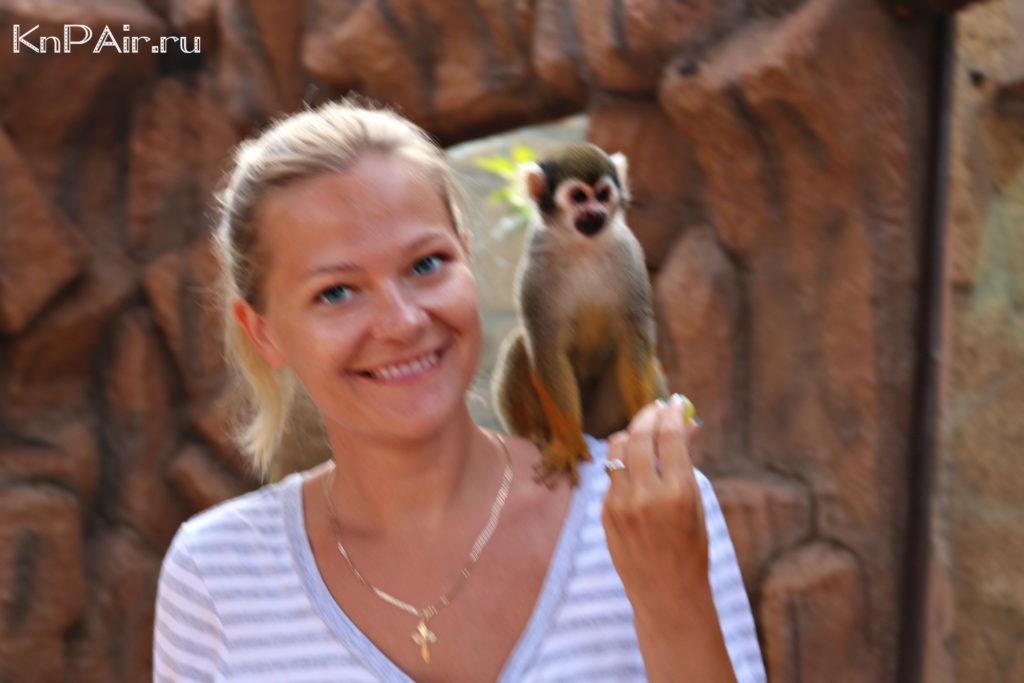 Ruchnye obezyanki v zooparke na tenerife