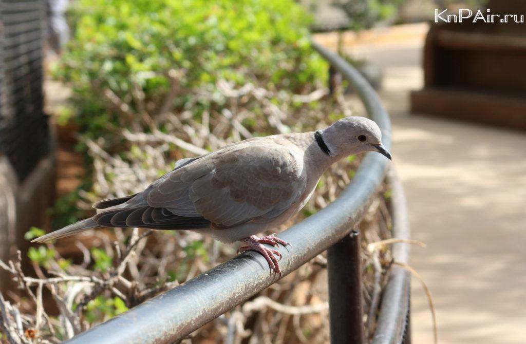 golub-tenerife