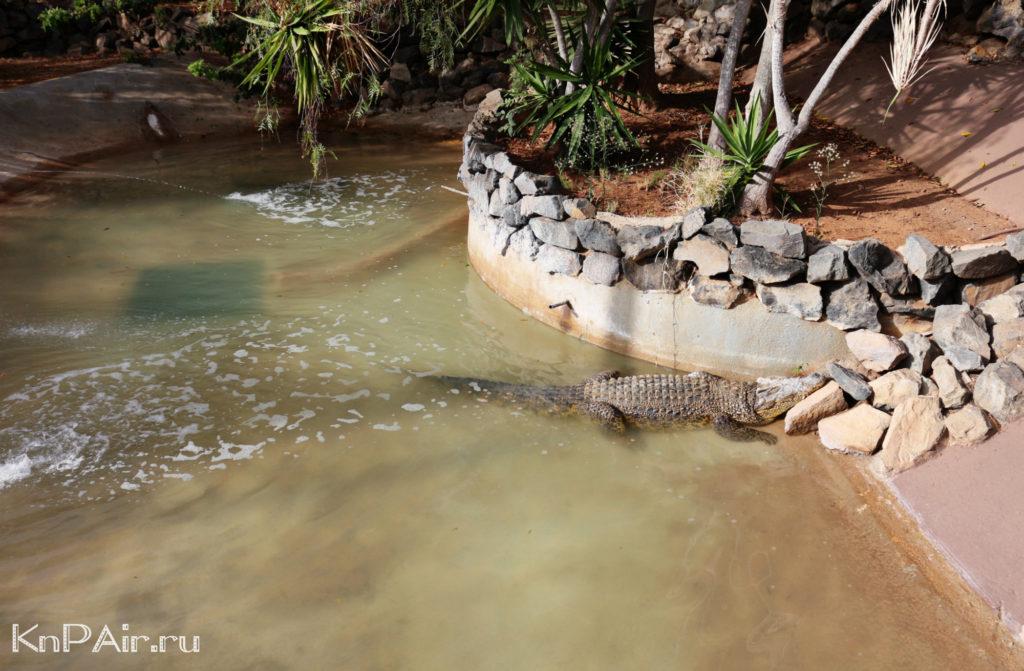krokodil-v-manki-park-tenerife