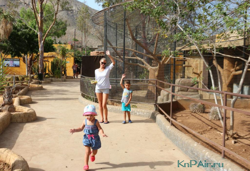 semejnyj-pohod-v-zoopark-tenerife