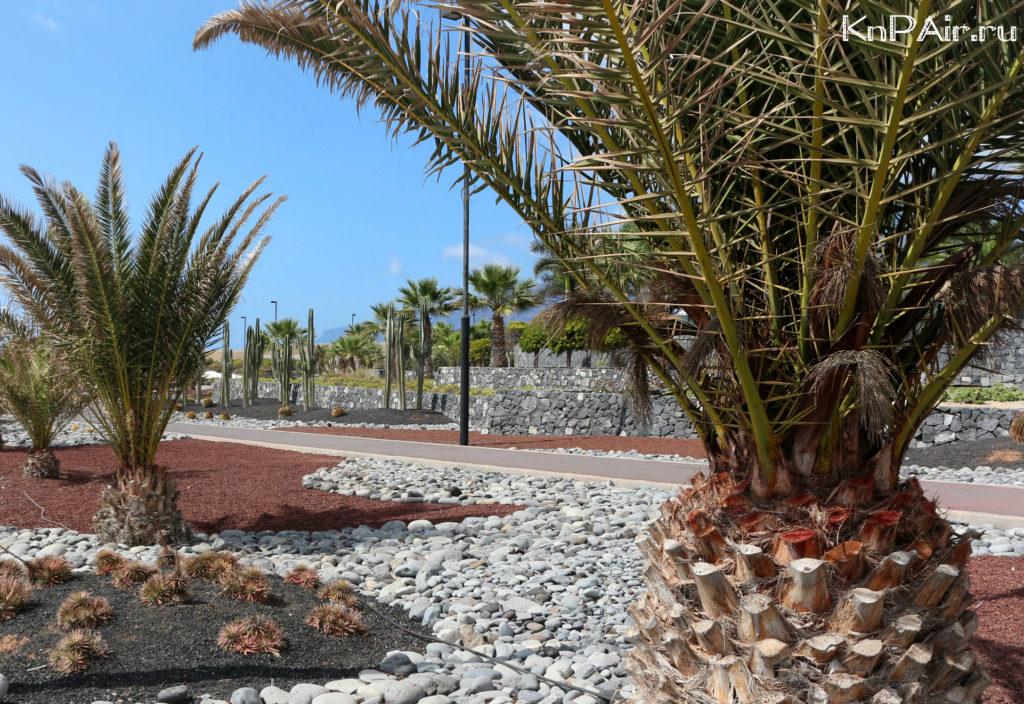 Promenad-v-Alcala-na-Tenerife