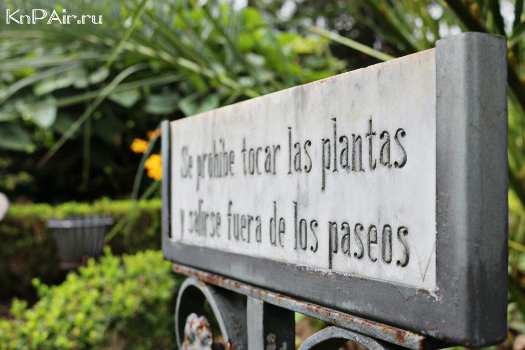 Sady v La Orotave