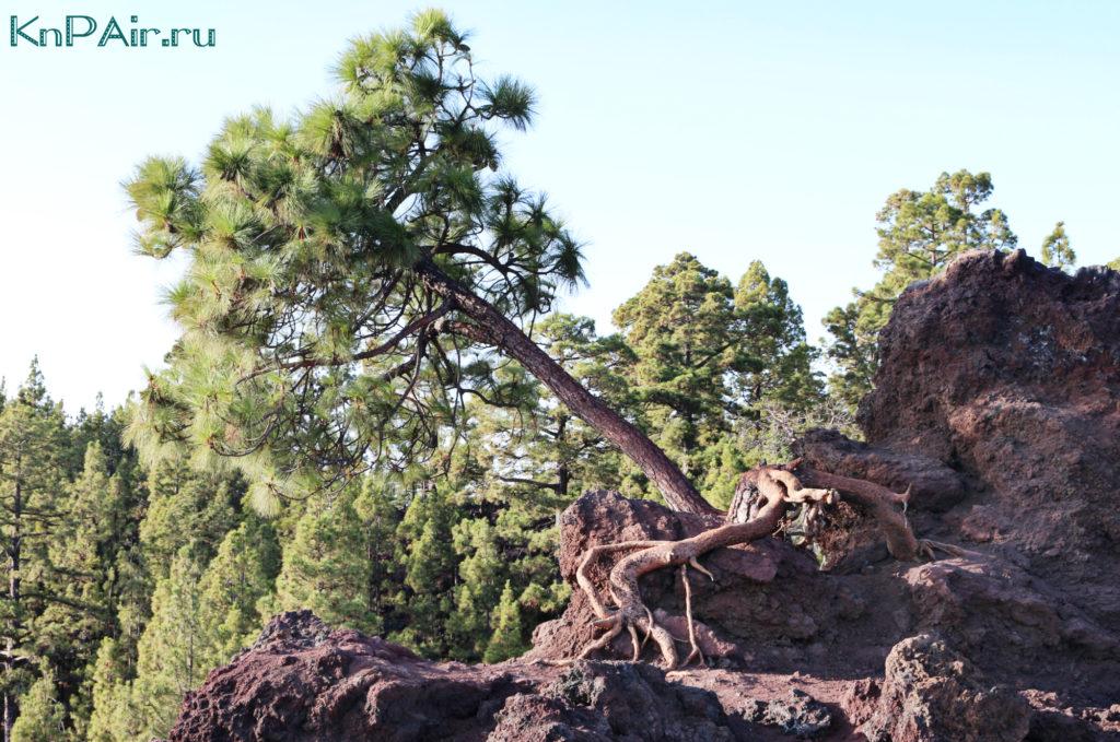Sklony-vulkana-Teide-s-detmi