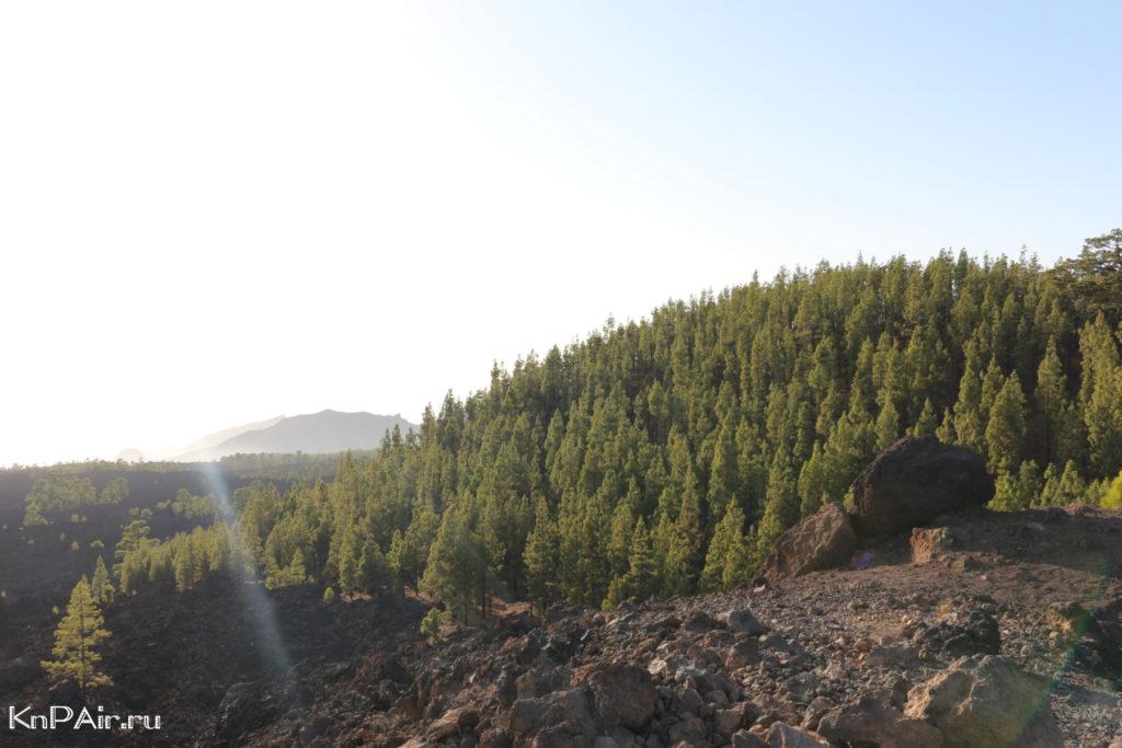 Korona-Forestal