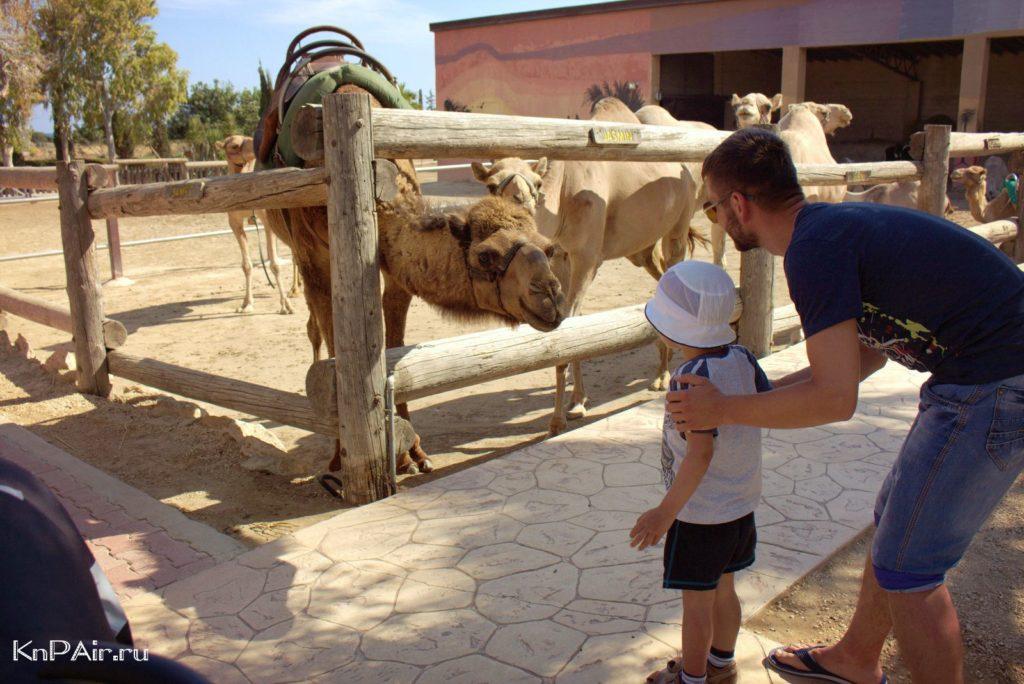 Camel-park-v-mazotos