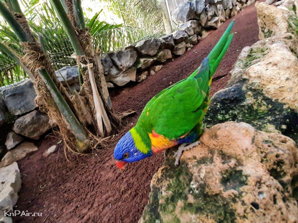 jungle-park-popugai-tenerife