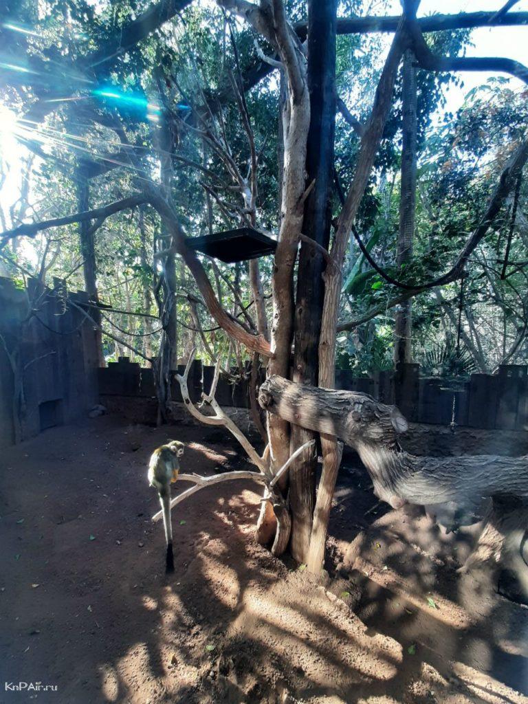 junglepark-park-orlov