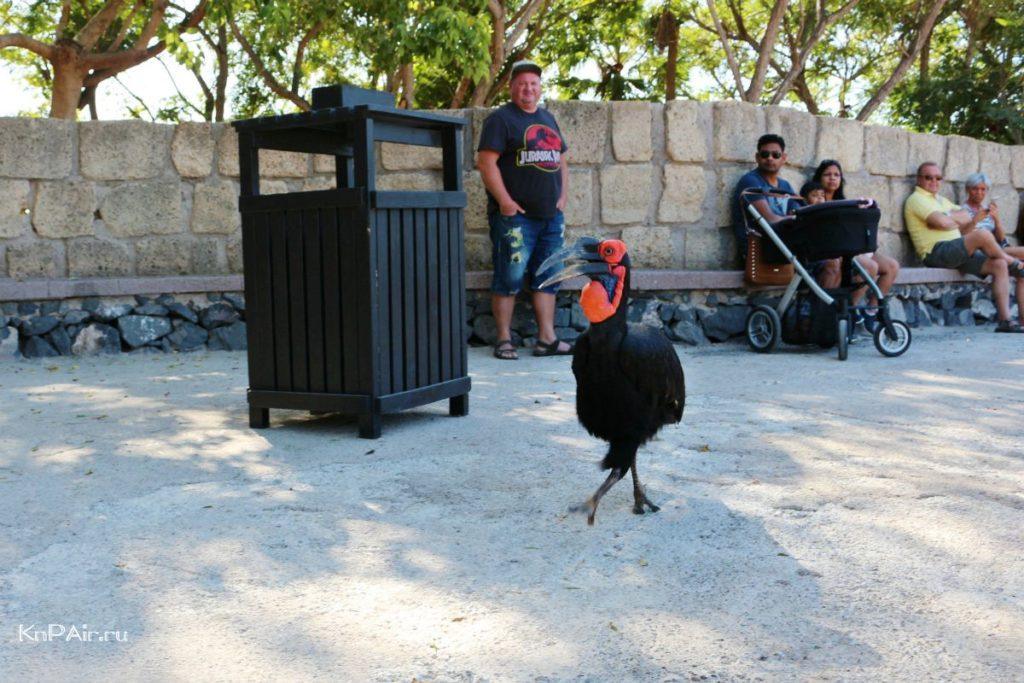 ptica-na-shou-orlov